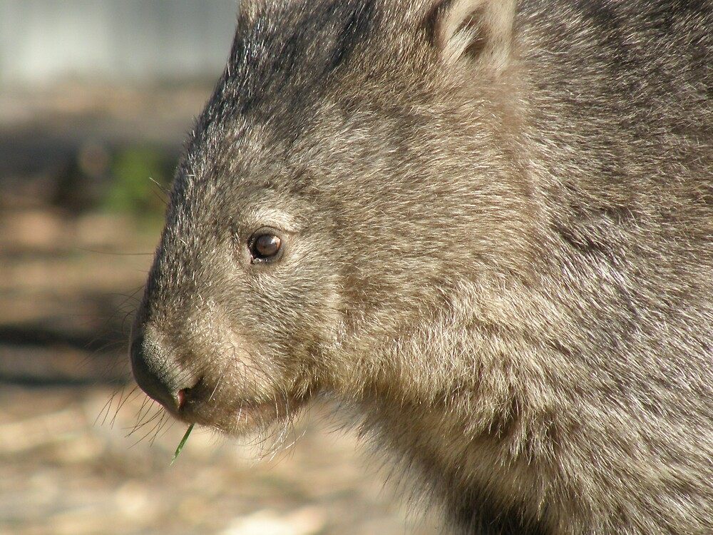 Wombat World  by ThomasMcG