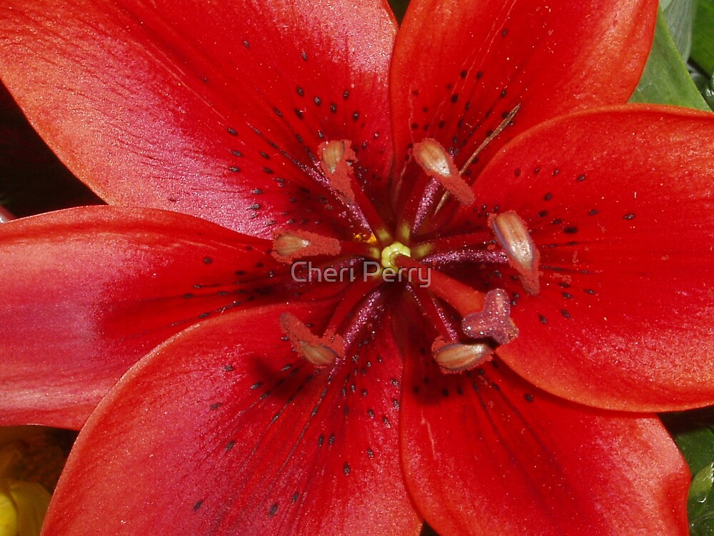 Red Lilly by Cheri Perry