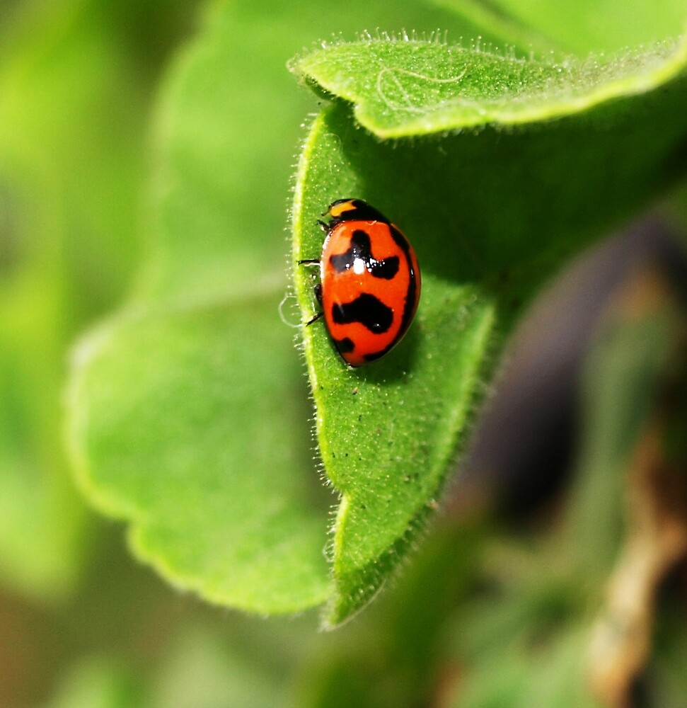 Ladybird by Kate456