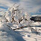 Frozen burnt snowgum by Kath Cashion