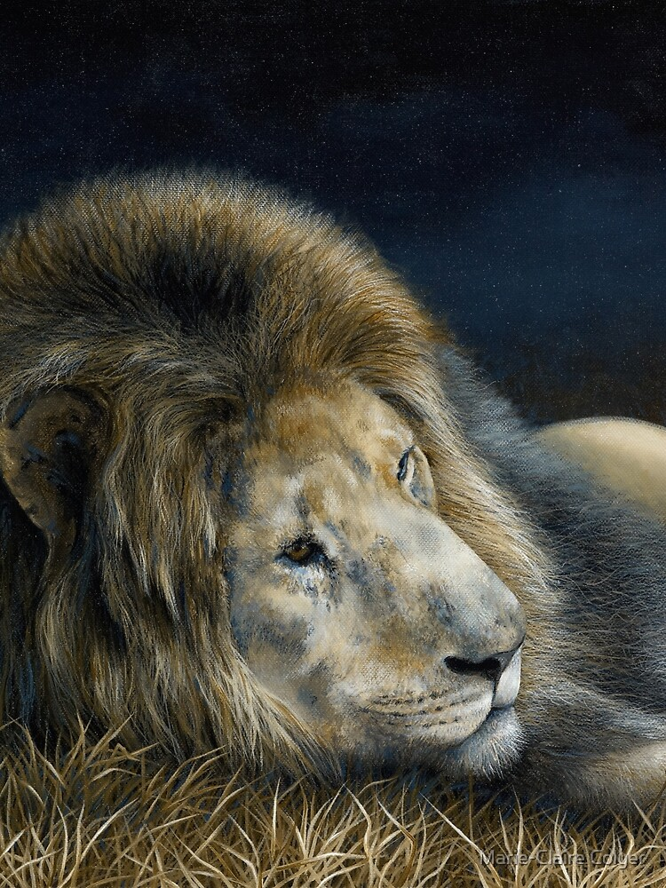 'Africa Dozing – Lion' by MCColyer