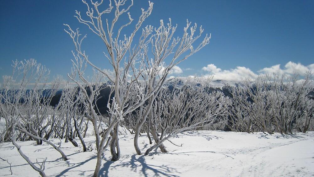 Snow gums by Kath Cashion
