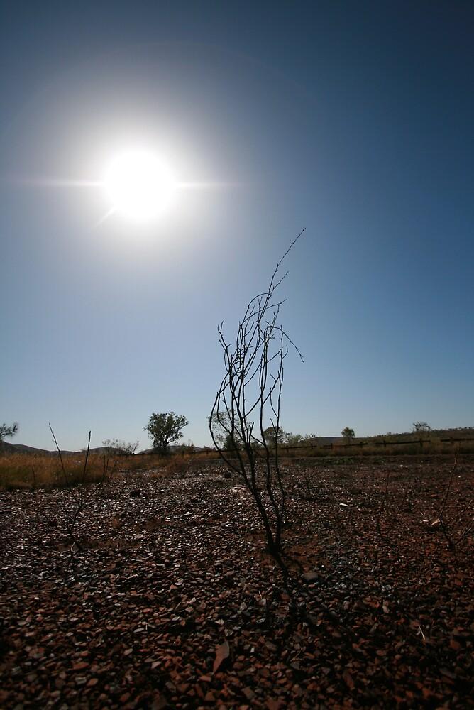 Burnt Tree, Pilbara by Leigh Penfold