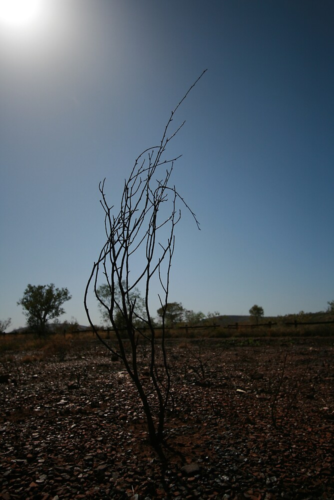 Burnt Tree, Pilbara by Leigh Penfold