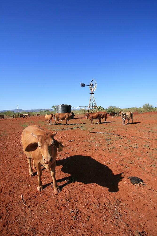 """Welcome to my waterhole..."", Pilbara by Leigh Penfold"