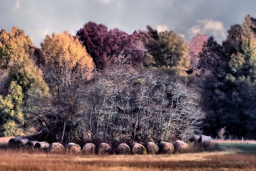 Hay Bales by melaniedion