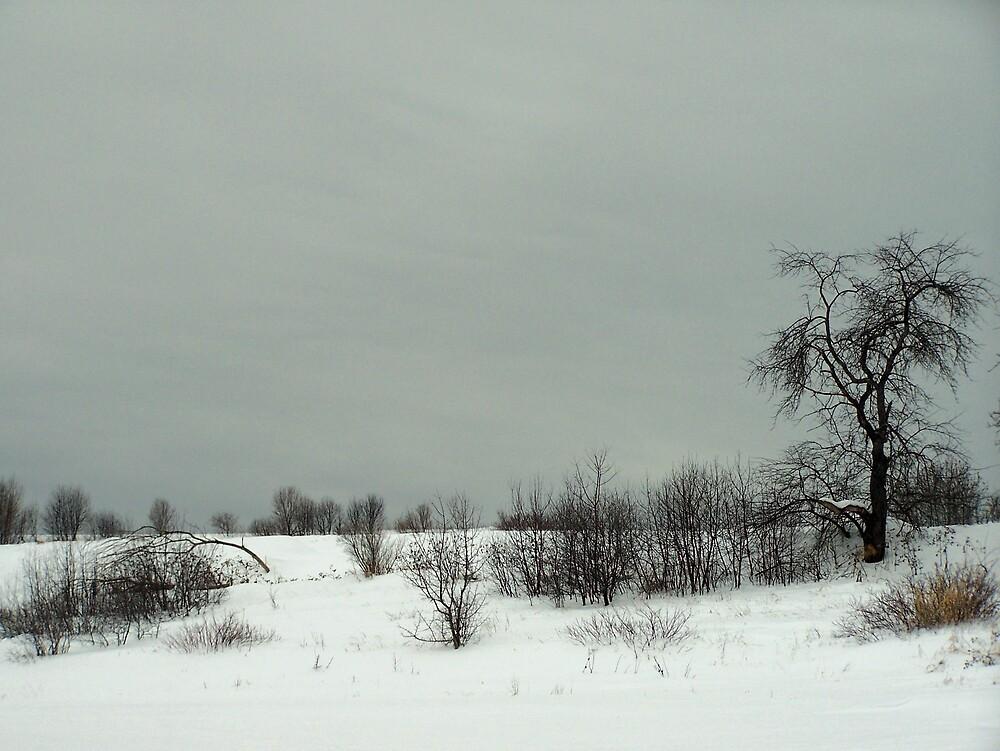 Gray Winter's Day by Gene Cyr