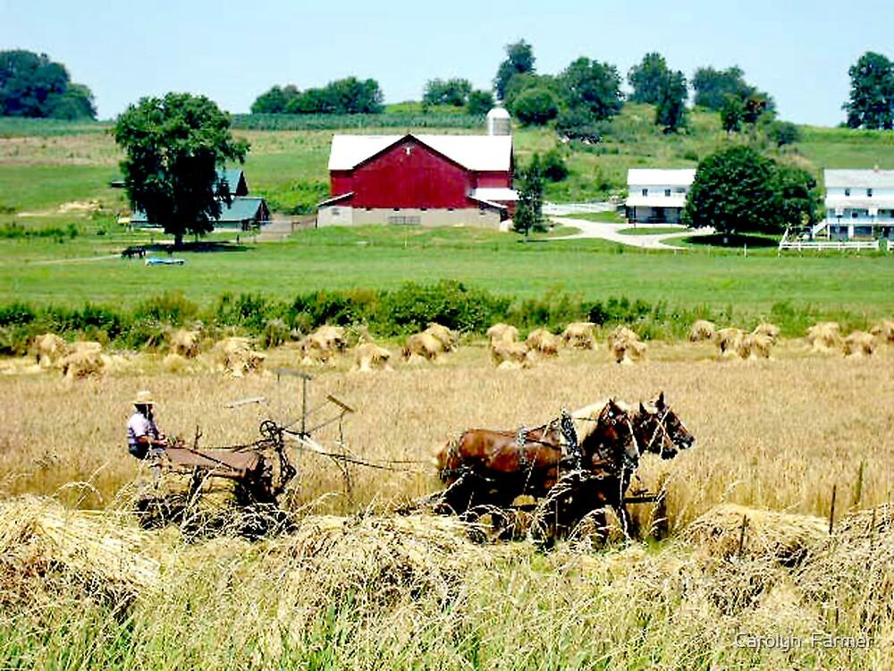 Amish Farm Life by Carolyn  Farmer