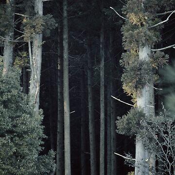 Dark Forrest by Shanique