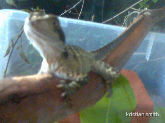 lizard 6 by kristian smith