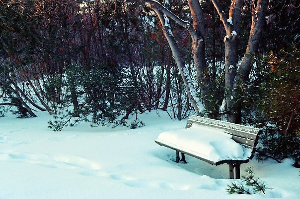 Bench by Sarah99