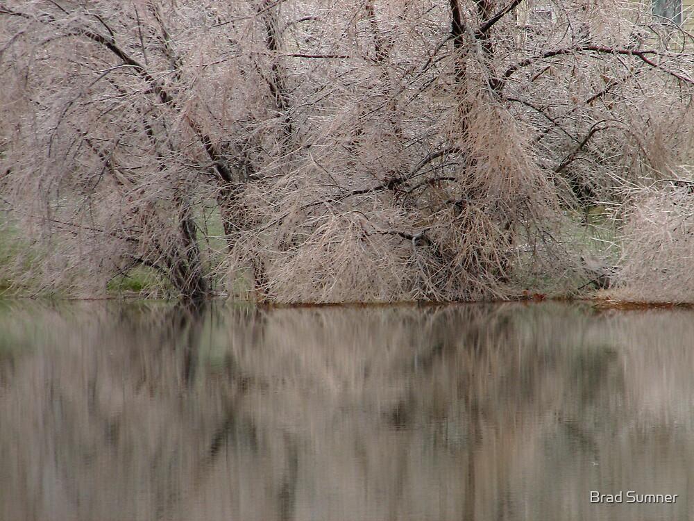 The Gloom of Winter by Brad Sumner