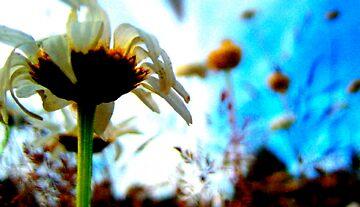 Summer Ease by josienick