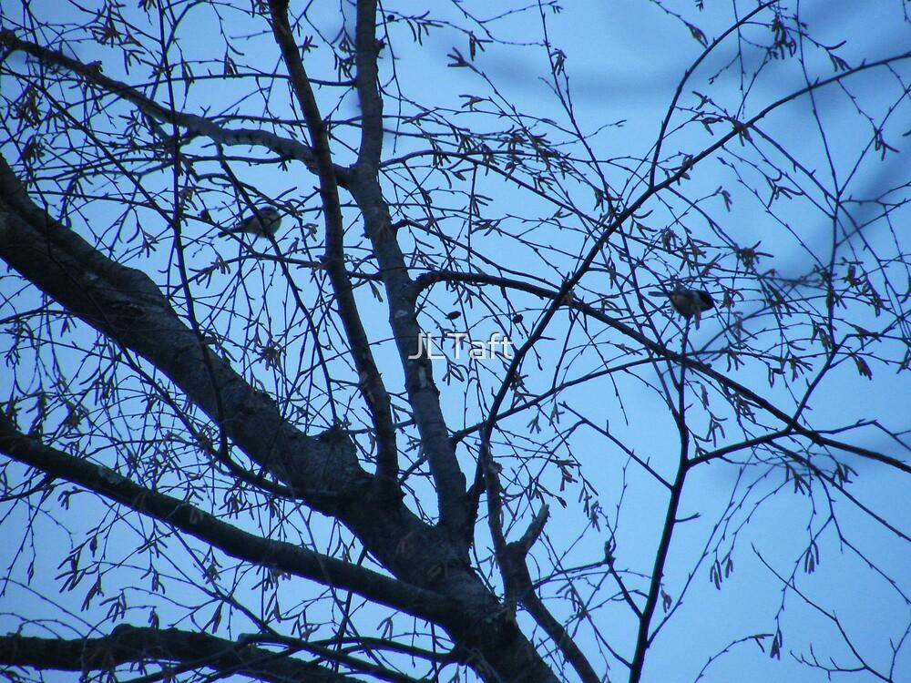 Winter Birds by JLTaft