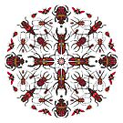 Beetle kaleidoscope by Phil West