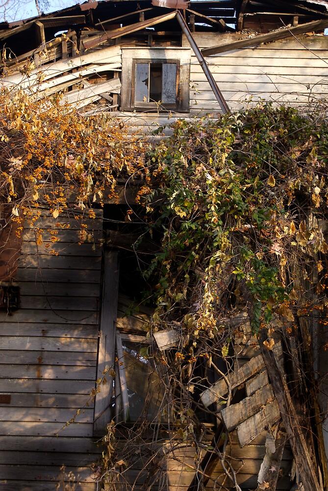 Overgrowth by Rod  Adams