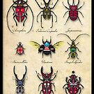 Bugs of the World by Phil West