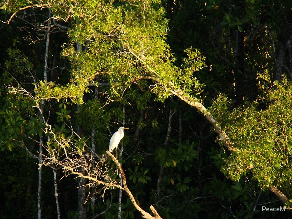 heron by PeaceM