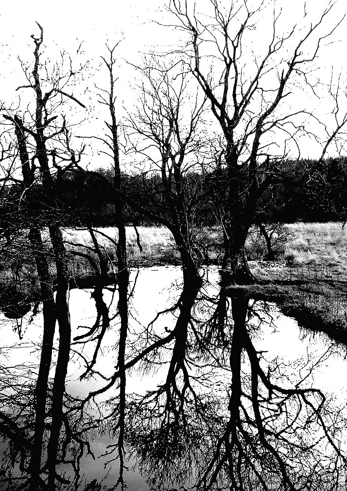 Tree Reflection by Puffling
