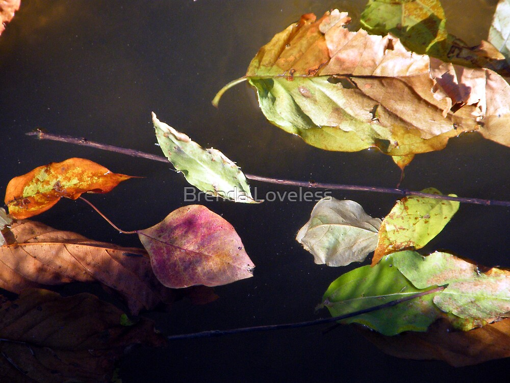 fallen colors by Brenda Loveless