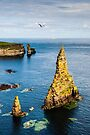 Duncansby Stacks by Mark Greenwood