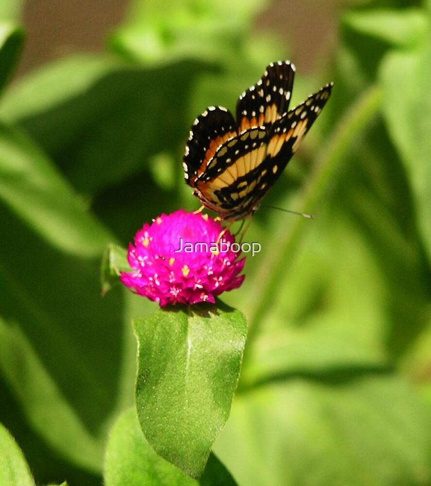 Butterfly on Pink Flower by Jamaboop