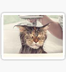 Wet cat in the bath Sticker