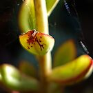 spider-silk rainbow by geof