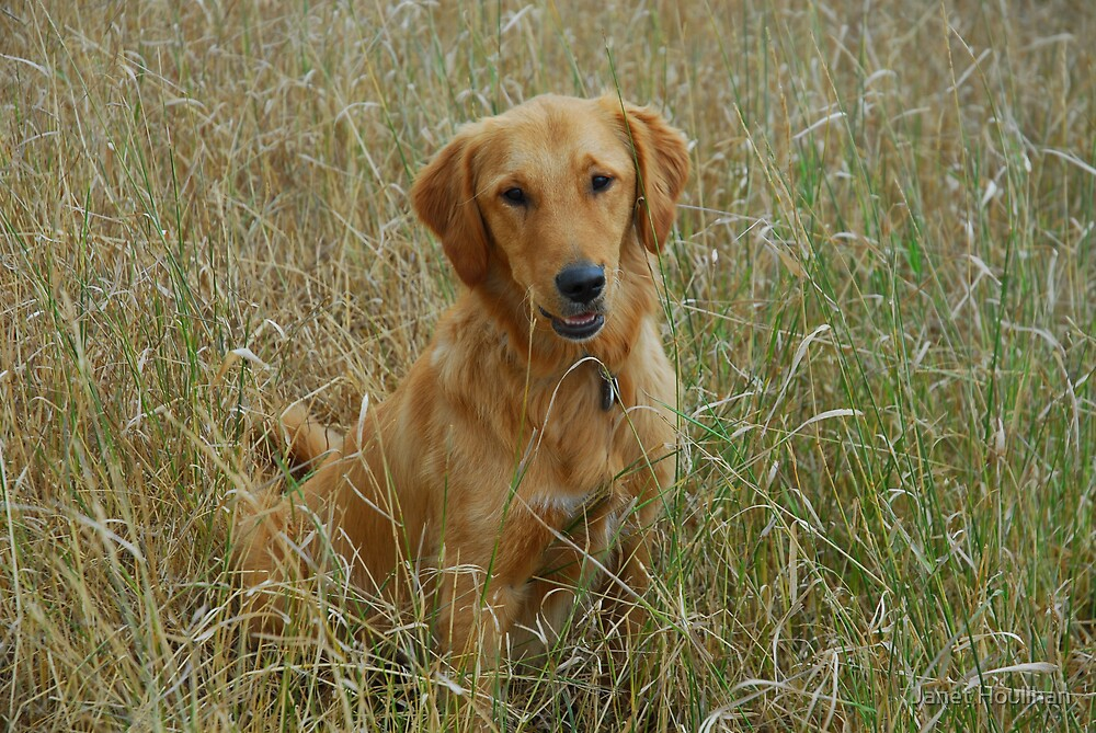 Tucker in the Meadow by Janet Houlihan