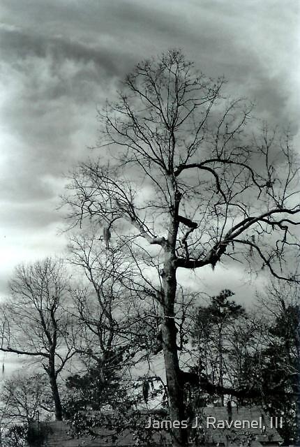 Tree In Winter by James J. Ravenel, III