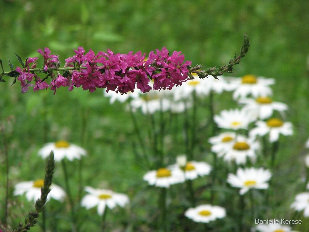 Flowers by Danielle Kerese