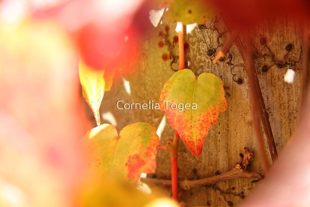 natural heart by Cornelia Togea