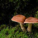 Mushroom Mushroom by Fred Frank