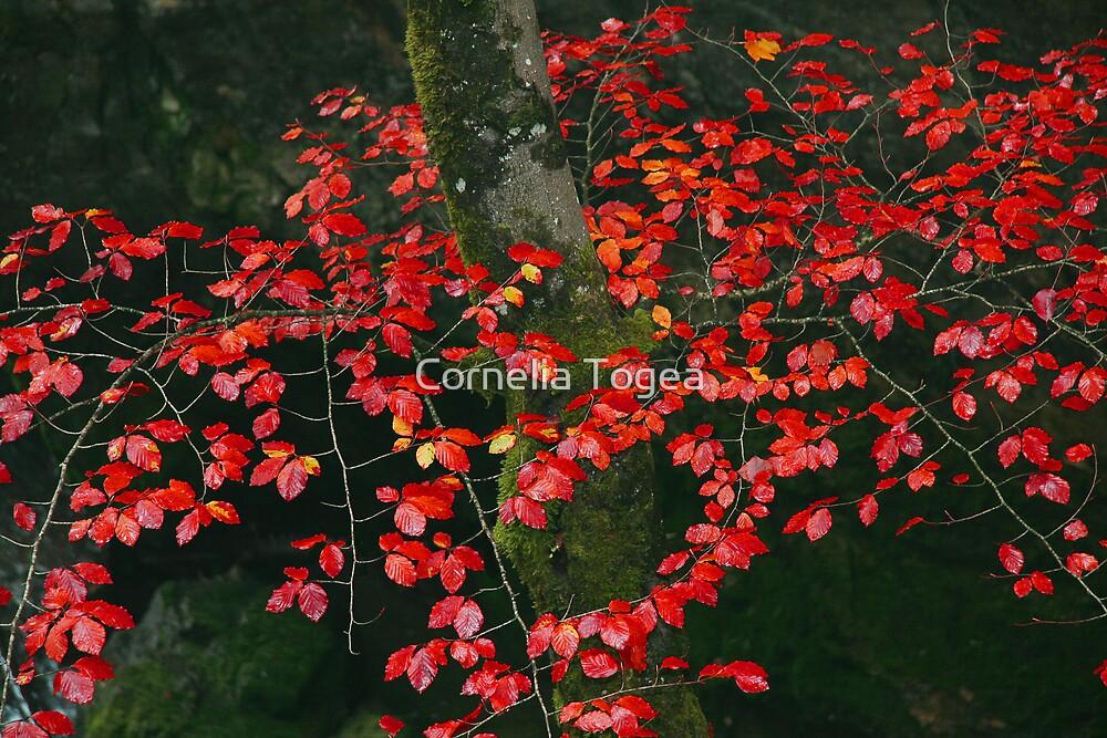 red leaf tree by Cornelia Togea