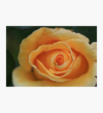 Apricot Swirl Photographic Print