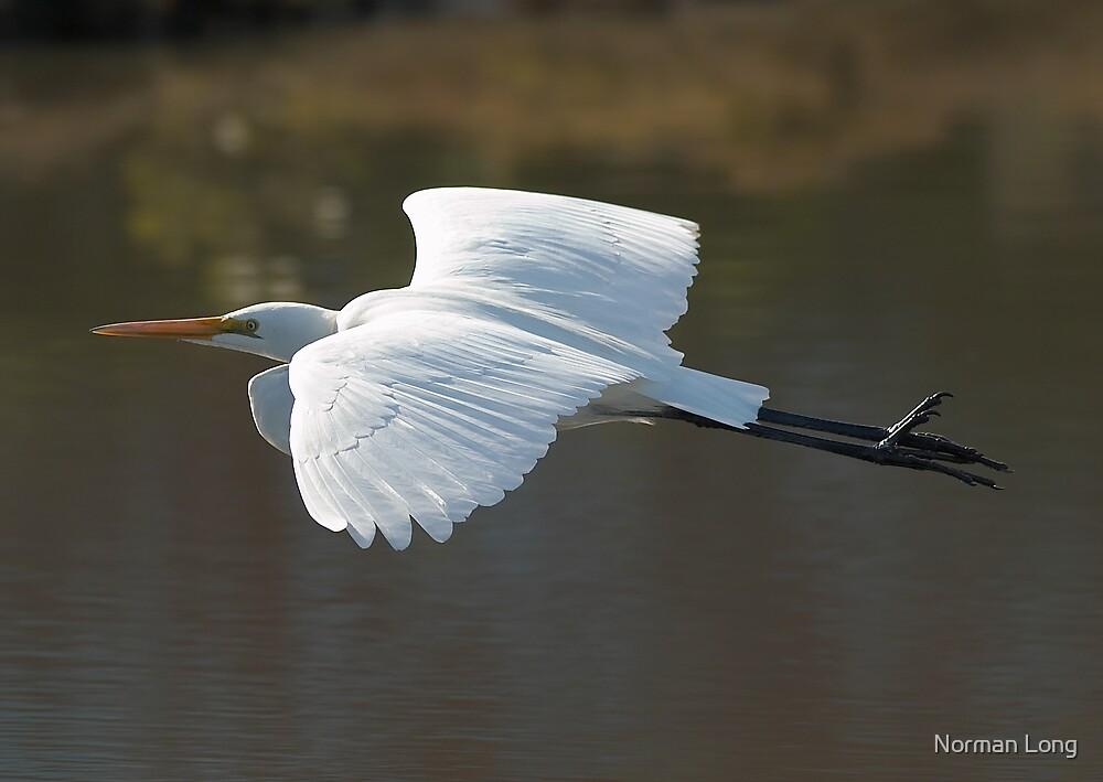 Egret in Flight by Norman Long