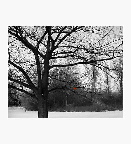 The Remnant Photographic Print