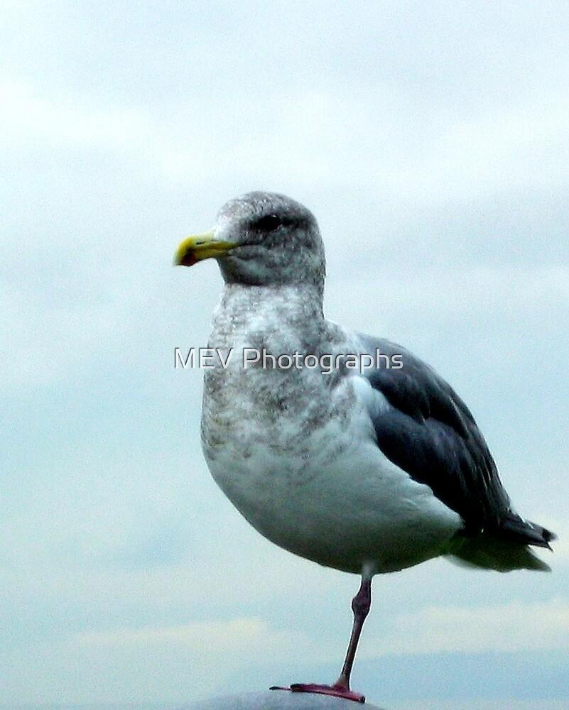 Standing still by MEV Photographs
