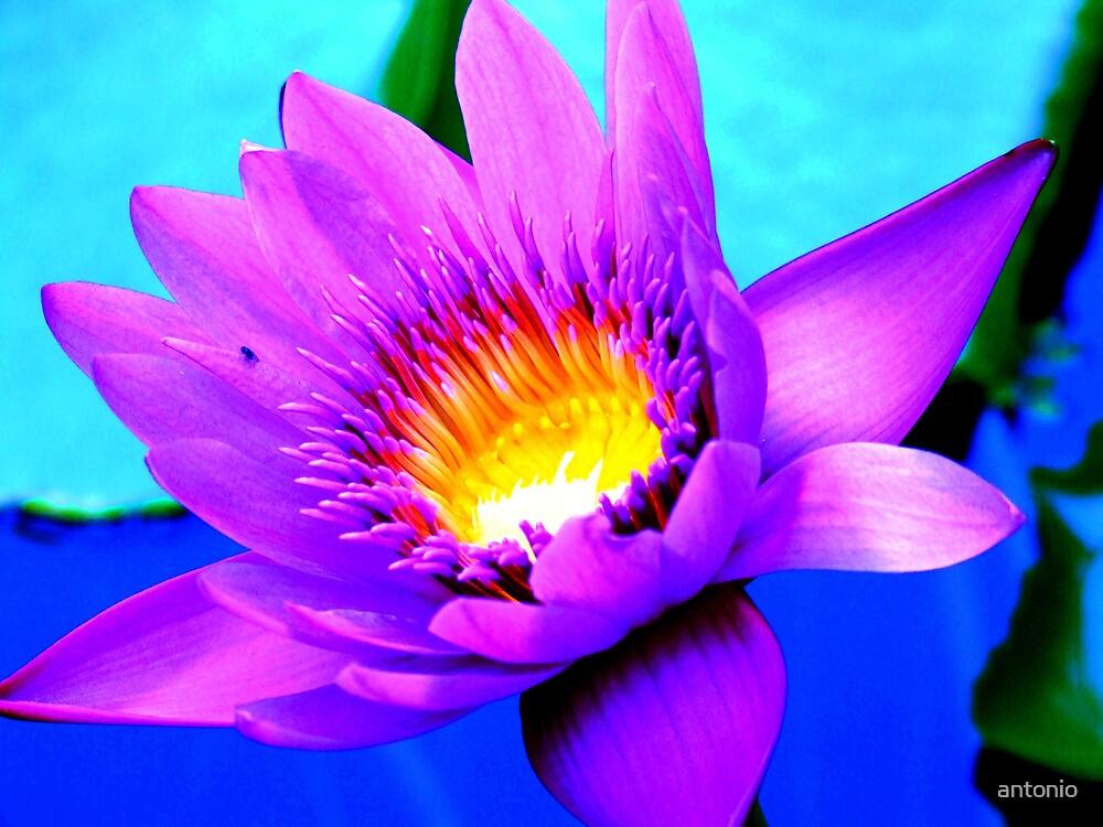 Flower by antonio
