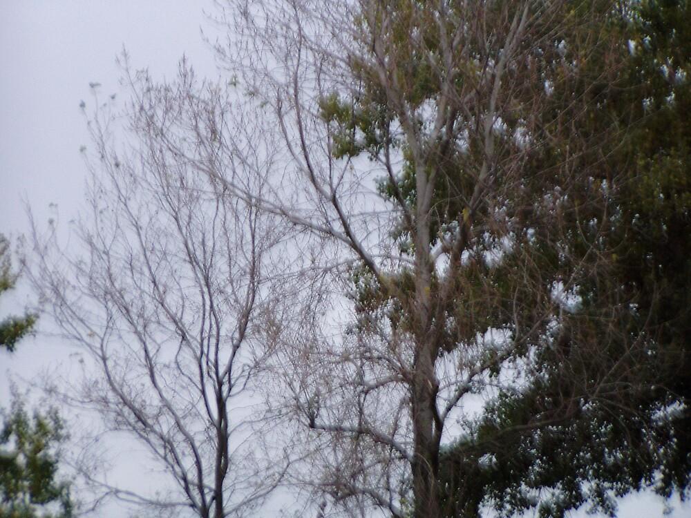 treescape by joelkim