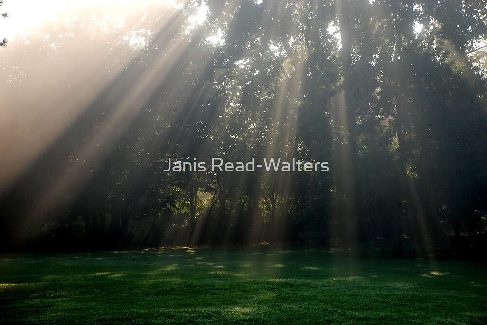 sunlight by Janis Read-Walters