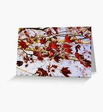 New Life - King Crimson Greeting Card
