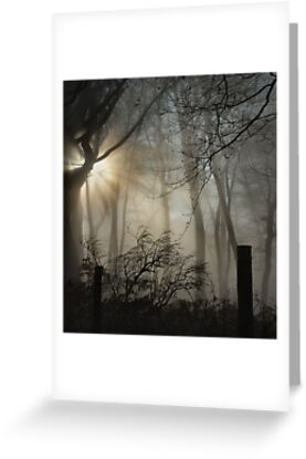 woods in fog by kathi jones