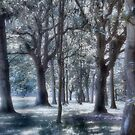 Enchanted forest by kathi jones