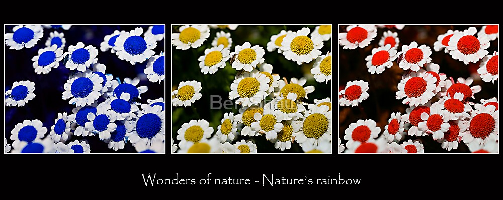 Wonders of Nature - Nature's Rainbow by Ben Shaw