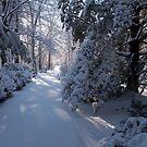 Snow on Signal Mountain 2 by methec