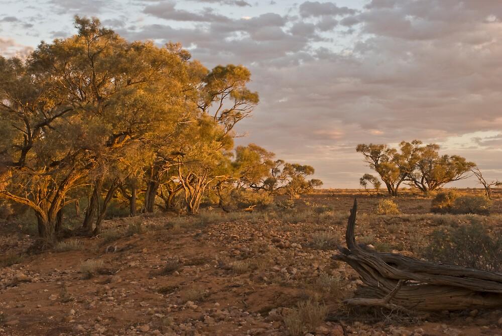 Dry Creek by Craig Hender