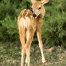 Fawn Of My Heart by Gregory J Summers