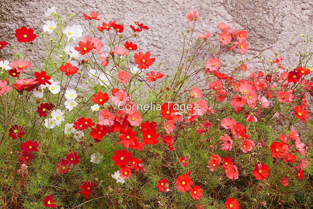 red joy by Cornelia Togea
