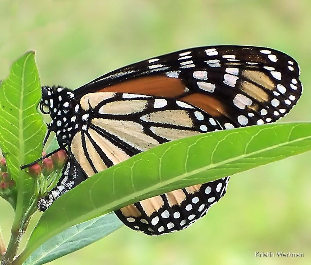 December Butterfly by Kristin Wertman